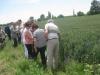 French farmer group in the wheat field / Farmergruppe aus Frankreich auf einem Weizenfeld