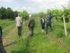 The famous Bulgarian vines / Die bekannten bulgarischen Reben
