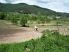 In the field / Auf dem Feld