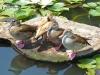 Ducks in the sun
