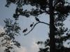 Storks at dawn